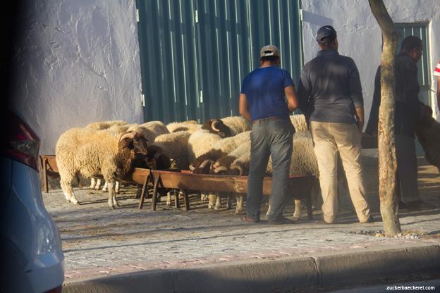 Schafverkauf