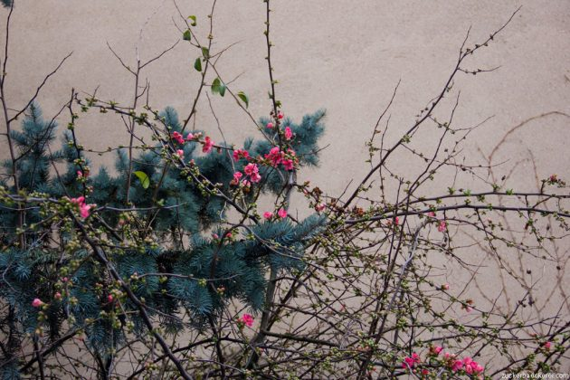 Blüten in Nancy