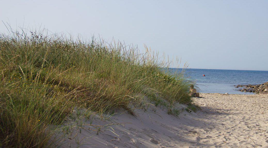 zugang zum strand mit einer grün bewachsenen Düne
