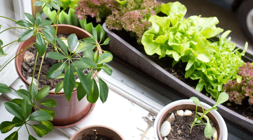 Pflanzen am Fensterbrett