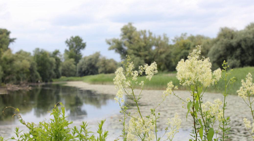 pflanzen mit weißen blüten vor einem gewässer