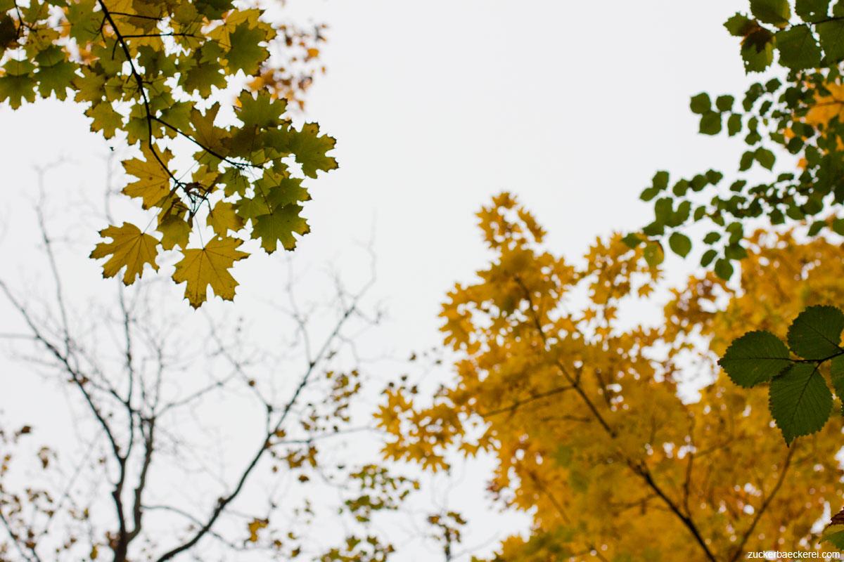 gelb gefärbter ahorn, von unten gegen den grauen himmel fotografiert