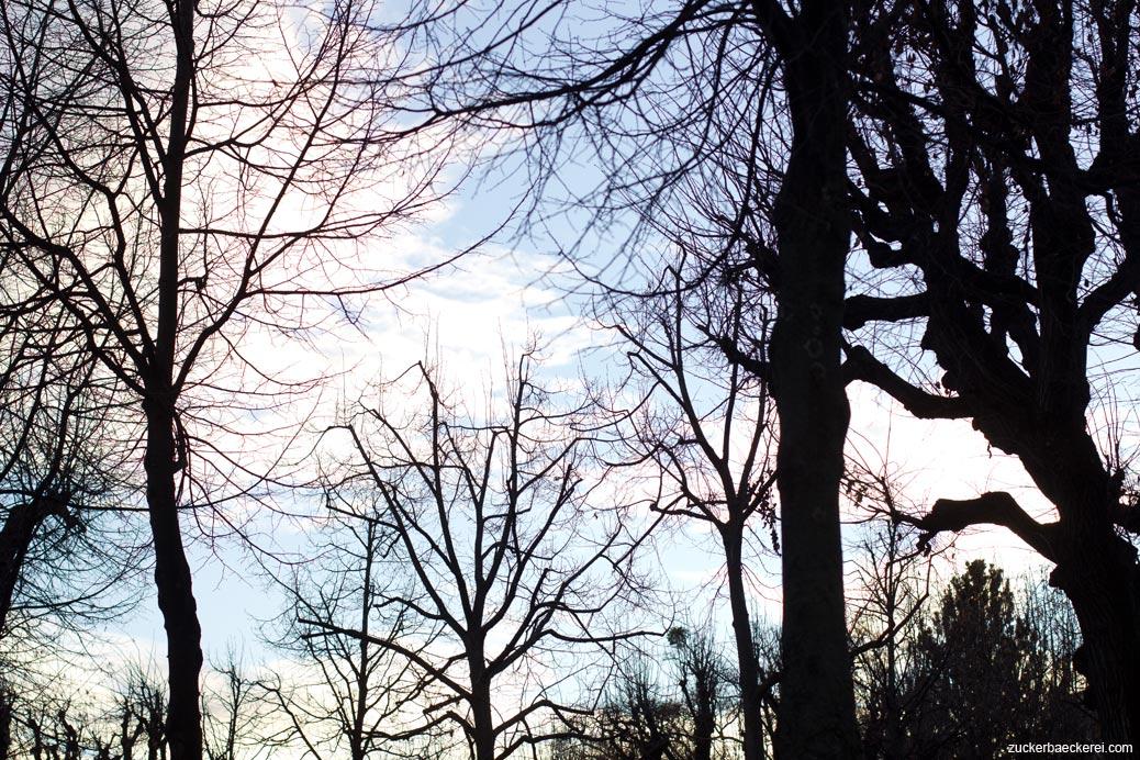 baumshilouetten vorm himmel